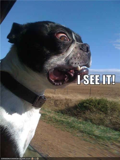 boston terrier Cannot Be Unseen do not want horrified i see it unsee what has been seen