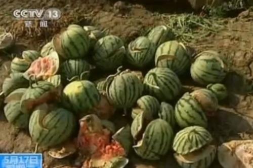 Exploding Watermelons,forchlorfenuron,In China,Meanwhile,Paging Gallagher
