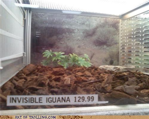 iguana invisible IRL pet store - 4771778048