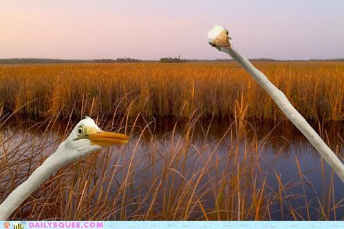 acting like animals bacon comparison egret egrets photobomb poppycock suddenly - 4771905024