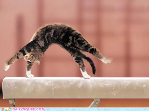 acting like animals,balance beam,beam,bridge,cat,cliffhanger,FAIL,Gravity,gymnastic,gymnastics,routine,upside down