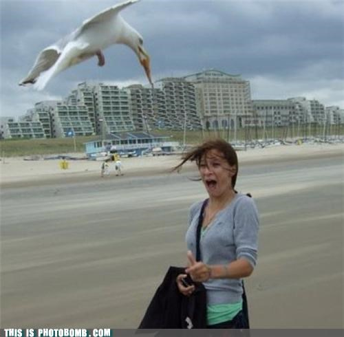 Animal Bomb beach poo seagull - 4772601856