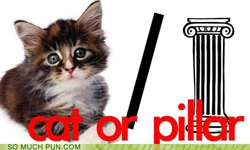 cat caterpillar homophones kitten literalism metamorphosis or pillar similar sounding syllables - 4772733440