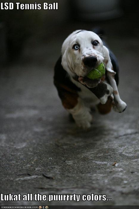 ball,critters,dogs,lsd