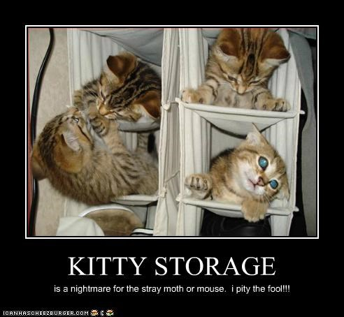 KITTY STORAGE is a nightmare for the stray moth or mouse. i pity the fool!!!