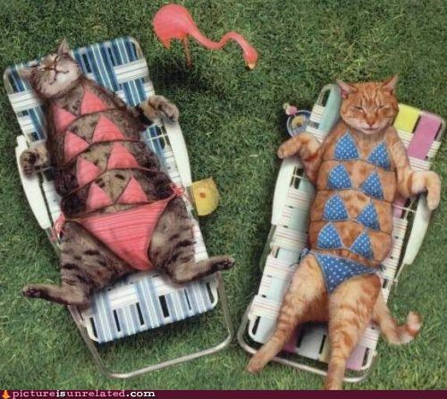 animals bikini Cats wtf - 4773415168