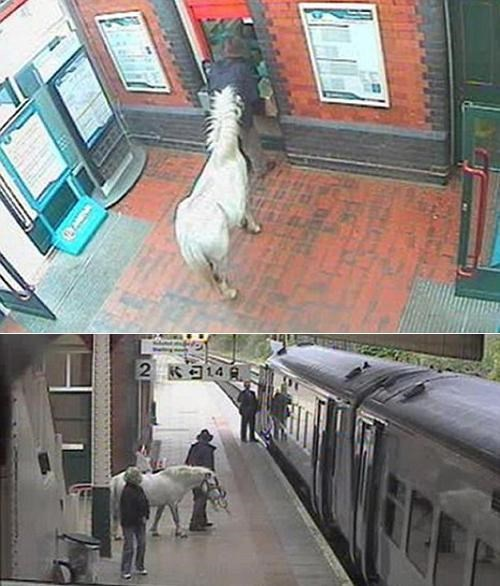 Meanwhile In Wrexham Pet Pony Well This Is Something - 4773844736