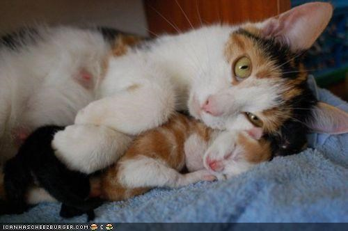 baby,blanket,cyoot kitteh of teh day,family,love,mom,protecting,sleeping,tiny,warm