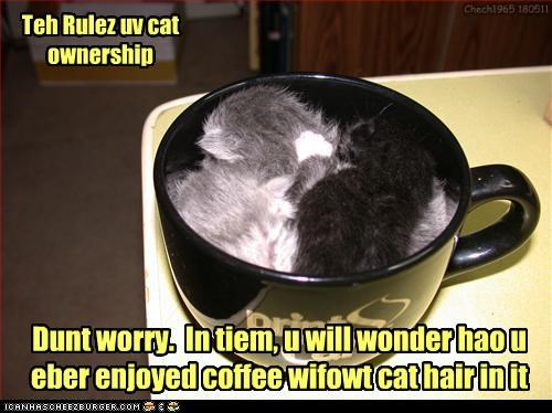 caption captioned cat cat hair Cats coffee cup kitten mug ownership rules time - 4774529536