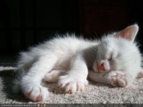 cyoot kitteh of teh day,sleeping,sun,sunbeam,tired,white