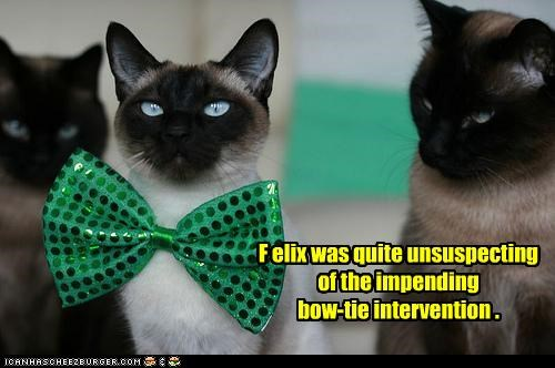 bow tie caption captioned cat Cats intervening intervention siamese unsuspecting