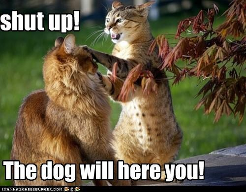 shut up! The dog will here you!