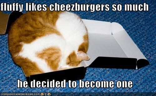 Cheezburger Image 4774936320