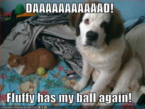 again,ball,cat,complaining,dad,puppy,saint bernard,stole,tabby