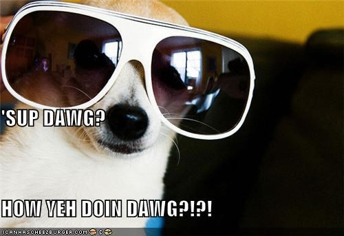 bro chihuahua cool glasses mixed breed question sunglasses sup