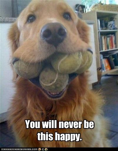 ball,balls,be,golden retriever,happy,never,tennis ball,this