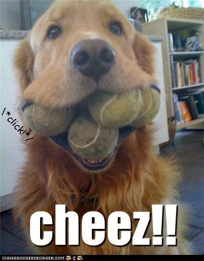 Cheezburger Image 4776010752