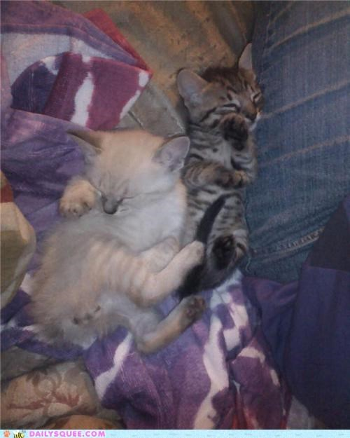 Babies baby brother cat Cats cuddling cute kitten reader squees siblings sister - 4776300544