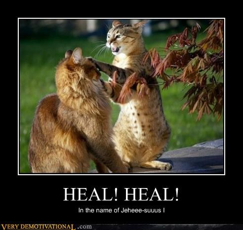 cat,healer,Pure Awesome,wtf