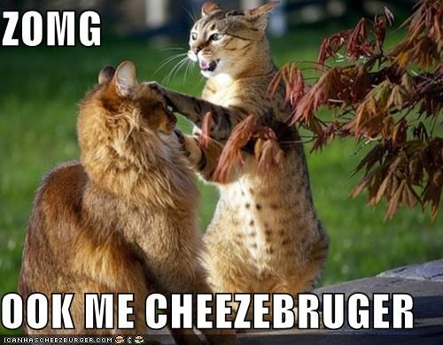 Cheezburger Image 4776622848