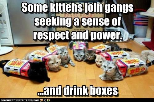 Some kittehs join gangs seeking a sense of respect and power. ...and drink boxes Some kittehs join gangs seeking a sense of respect and power. ...and drink boxes