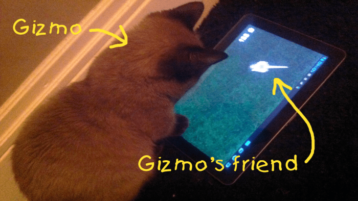 apps tablets funny cat games - 4776965