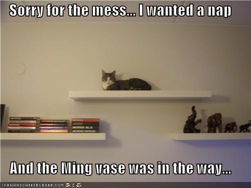 caption,captioned,cat,explanation,in the way,mess,nap,shelf,sitting,sorry,vase,wanted