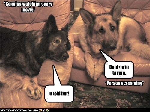 *Goggies watching scary movie* *Person screaming* Dont go in ta rum, u told her!