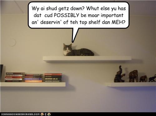 Wy ai shud getz down? Whut else yu has dat cud POSSIBLY be moar important an' deservin' of teh top shelf dan MEH?