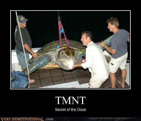 animals hilarious huge nature TMNT turtle - 4777719296