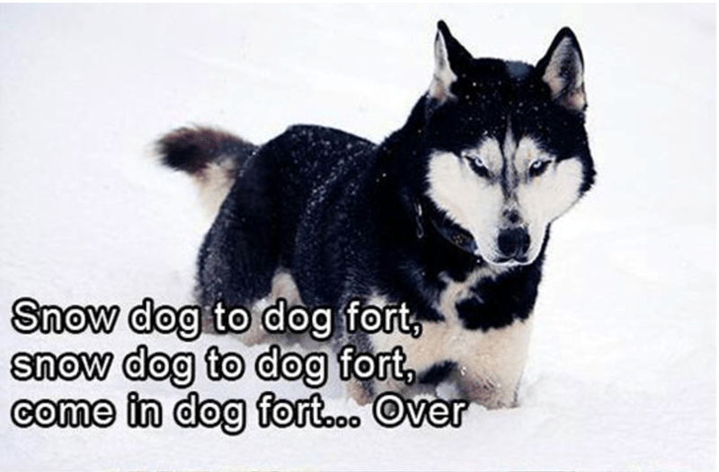 dogs snowball fights Cats funny - 4777989