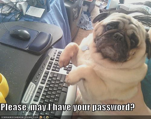 computer password please pug question request