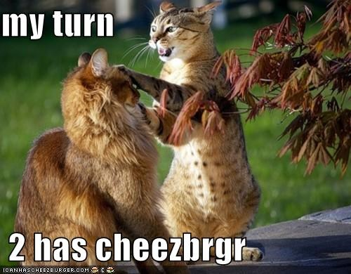 Cheezburger Image 4778561024