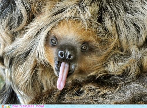 baby ever ridiculous silly sloth tongue yawn yawning - 4778599680