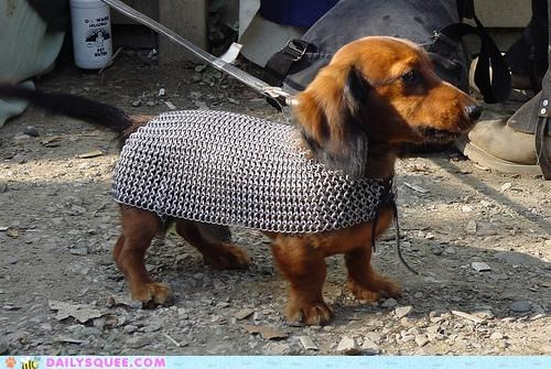 acting like animals,armor,chain mail,dachshund,dogs,gandalf,Lord of the Rings,mithril,mordor,ring,volunteering