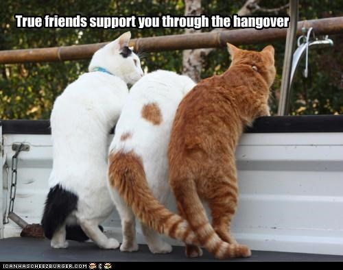 caption captioned cat Cats friends Hall of Fame hangover support tabbies tabby through true - 4779202048