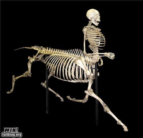 animals bones humans hybrid taxidermy