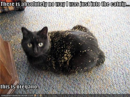 There is absolutely no way I was just into the catnip...  this is oregano.