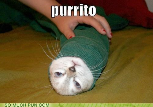 burrito,cat,purrito,similar sounding,wrapped up