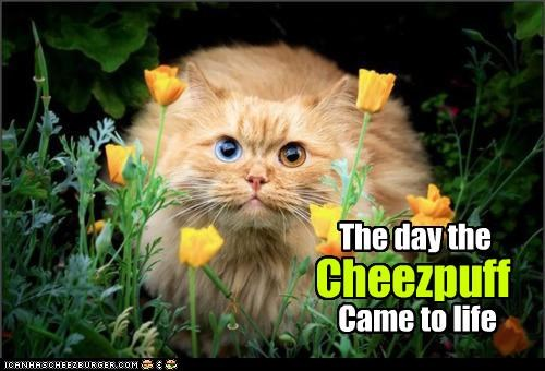 alive,came,caption,captioned,cat,cheese puff,day,life,living,noms,tabby