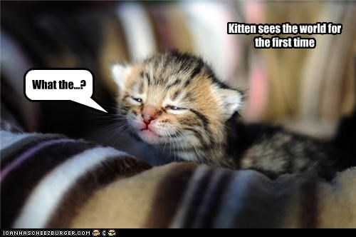 Kitten sees the world for the first time What the...?