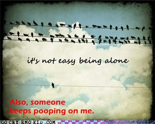 bird,forever alone,hipsterlulz,poop