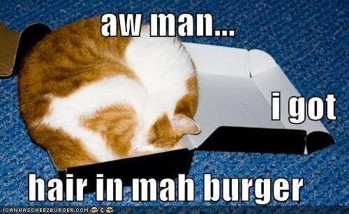 Cheezburger Image 4781047040