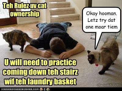 Teh Rulez uv cat ownership U will need to practice coming down teh stairz wif teh laundry basket Okay hooman. Letz try dat one moar tiem Chech1965 200511