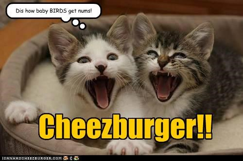 Cheezburger Image 4781186048