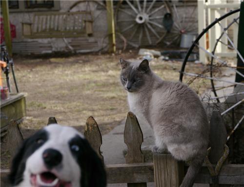 doggeh kitteh Sundog - 4781262336