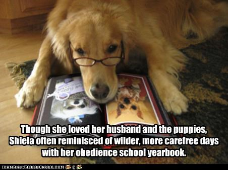 carefree dreaming golden retriever husband love nostalgia obedience school puppies remembering reminiscing wild yearbook youth - 4781355776