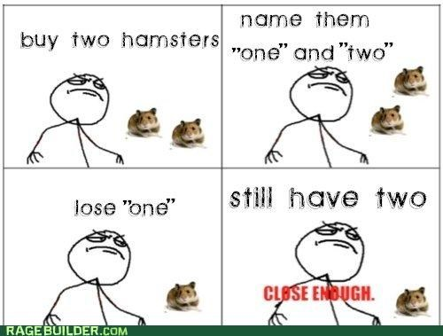 hamsters math one pets Rage Comics troll two - 4781531648