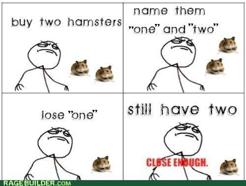 hamsters math one pets Rage Comics troll two - 4781531648