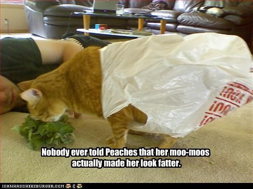 appearance,bag,caption,captioned,cat,dressed up,fatter,look,moo-moos,nobody,tabby,told,wearing